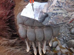 Big Bear Paw - Deltana Outfitters Alaska Bear Hunt