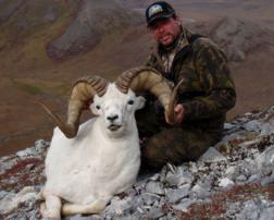 Arctic Alaska guided Dall Sheep Hunting