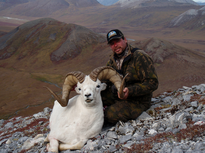 Frank Chapman Brooks Range Dall Sheep