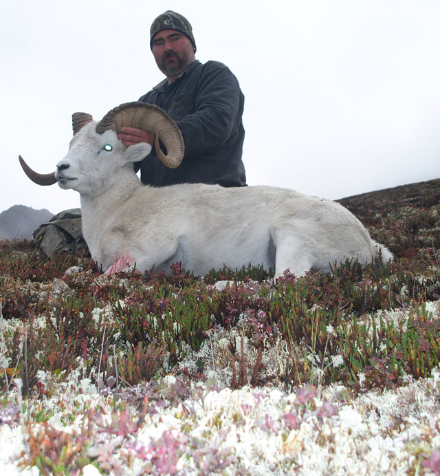 Jason Klassen_Brooks_Range_Dall_Sheep