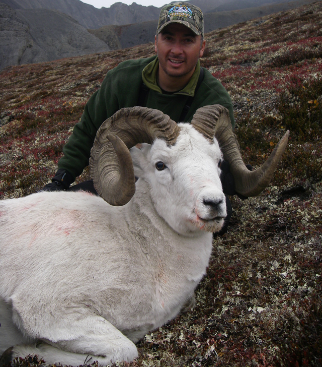 Jason Piaz_Brooks_Range_Dall_Sheep