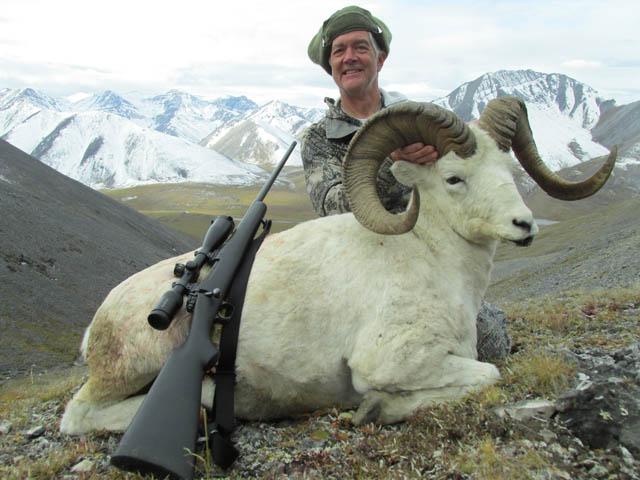 John Steenberg 2013 Dall Sheep