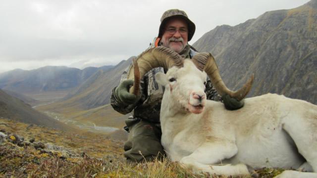 John_Madok_Sheep
