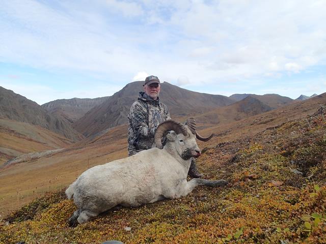 Kim Barnes Alaska Dall Sheep