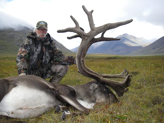 Lloyd's 2nd caribou