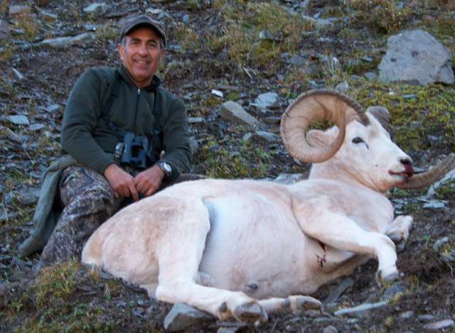 Roberto Torrez_Brooks_Range_Dall_Sheep