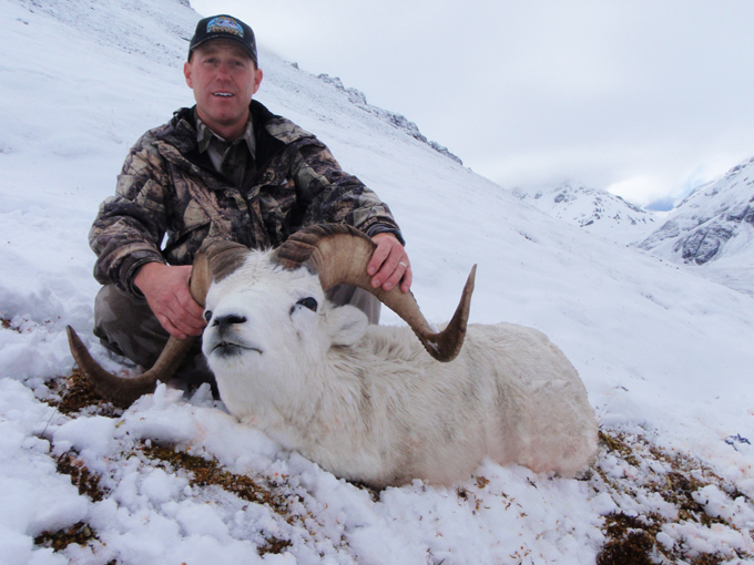 Brooks Range Dall Sheep