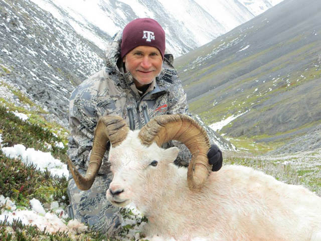 Terry 2013 Dall Sheep
