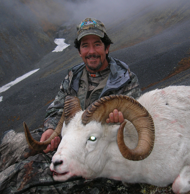Thomas Stack_Brooks_Range_Dall_Sheep