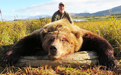 brown bear hunt alaska