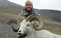 dall sheep hunt alaska